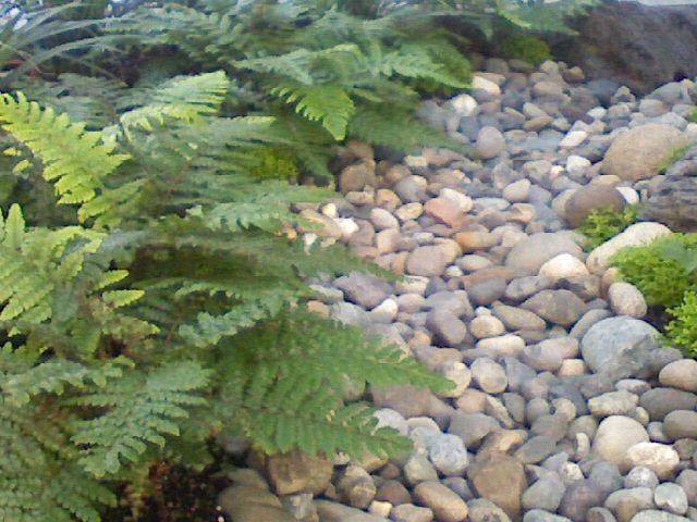 Image result for ferns dry creek bed